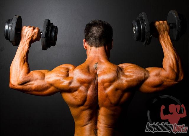 Плечевой пояс - подъем гантелей стоя