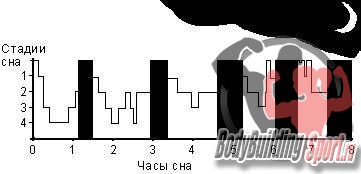 Стадии сна (черным - указана фаза парадоксального сна)