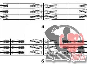 Сокращение миофибрилл: а) - до сокращения, б) - после сокращения