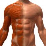 Восстановление организма после тренировок