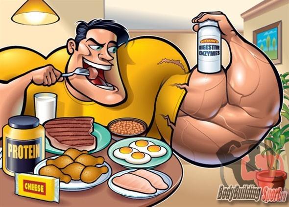 Поступления белка в организм
